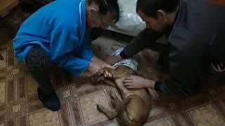 Диагноз Макса\Что с собакой которую мы нашли в лесу