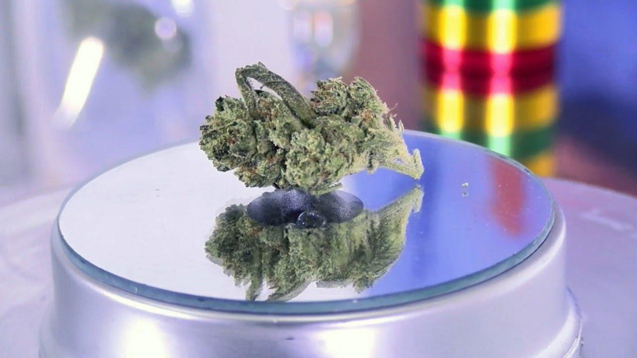 Panama Punch (marijuana review)