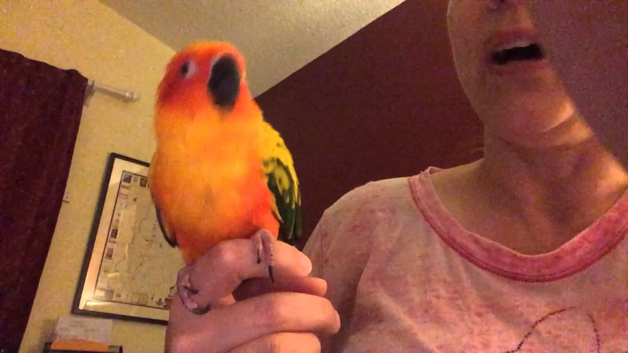 Beatbox Parrot