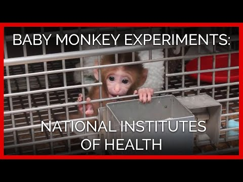 Baby Monkey Experiments Exposed | National Institutes of Health