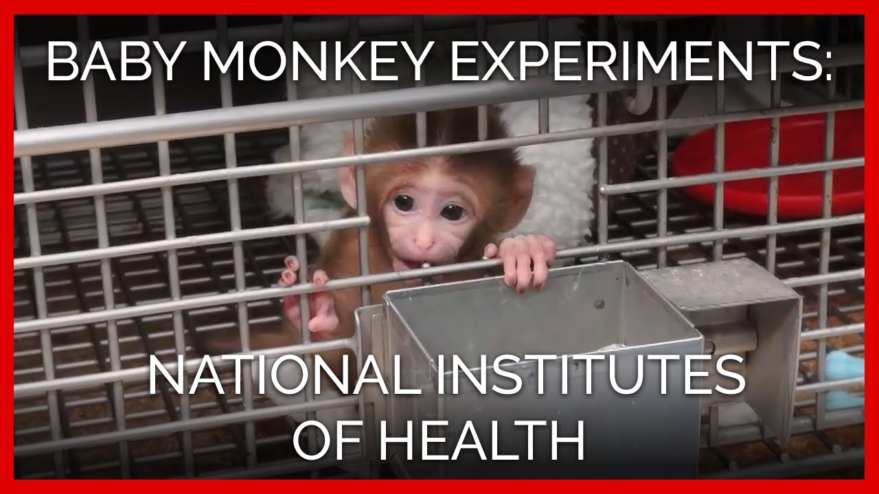 An analysis of the proper ethics in animal experiments or testing