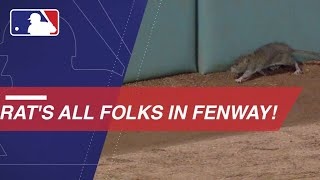 Rats, both dead and alive, invade Fenway