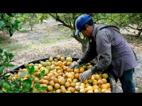 How raids against undocumented workers affect agriculture