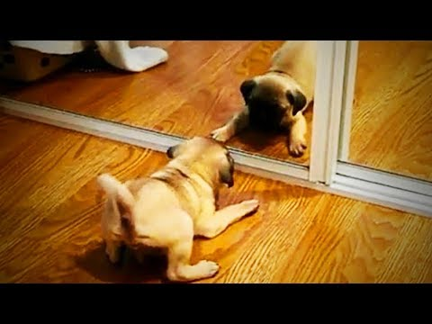 Funny Cats and Dogs Vs. Mirrors 😻🐶  Funny Pets Playing (Part 1) [Funny Pets]