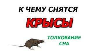 видео К чему снятся крысы? Сонник: приснилась белая крыса во сне