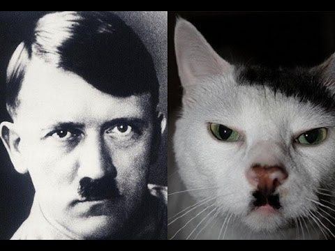 фото котик-гитлер