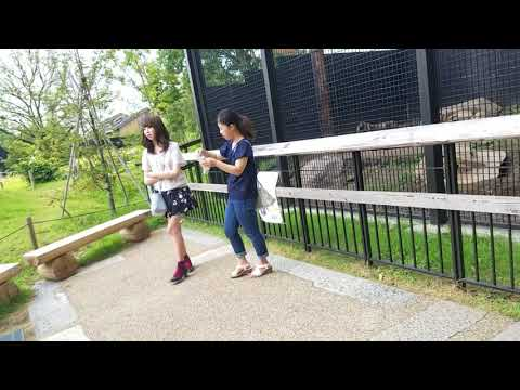 Walk Around Kyoto City Zoo in Japan 9.6.2017 (10 Minutes Long)