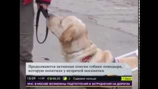Юлия Дьякова не узнает свою собаку-поводыря Диану