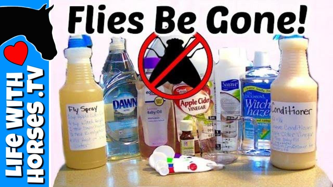 DIY Fly Spray Recipe | How to Make