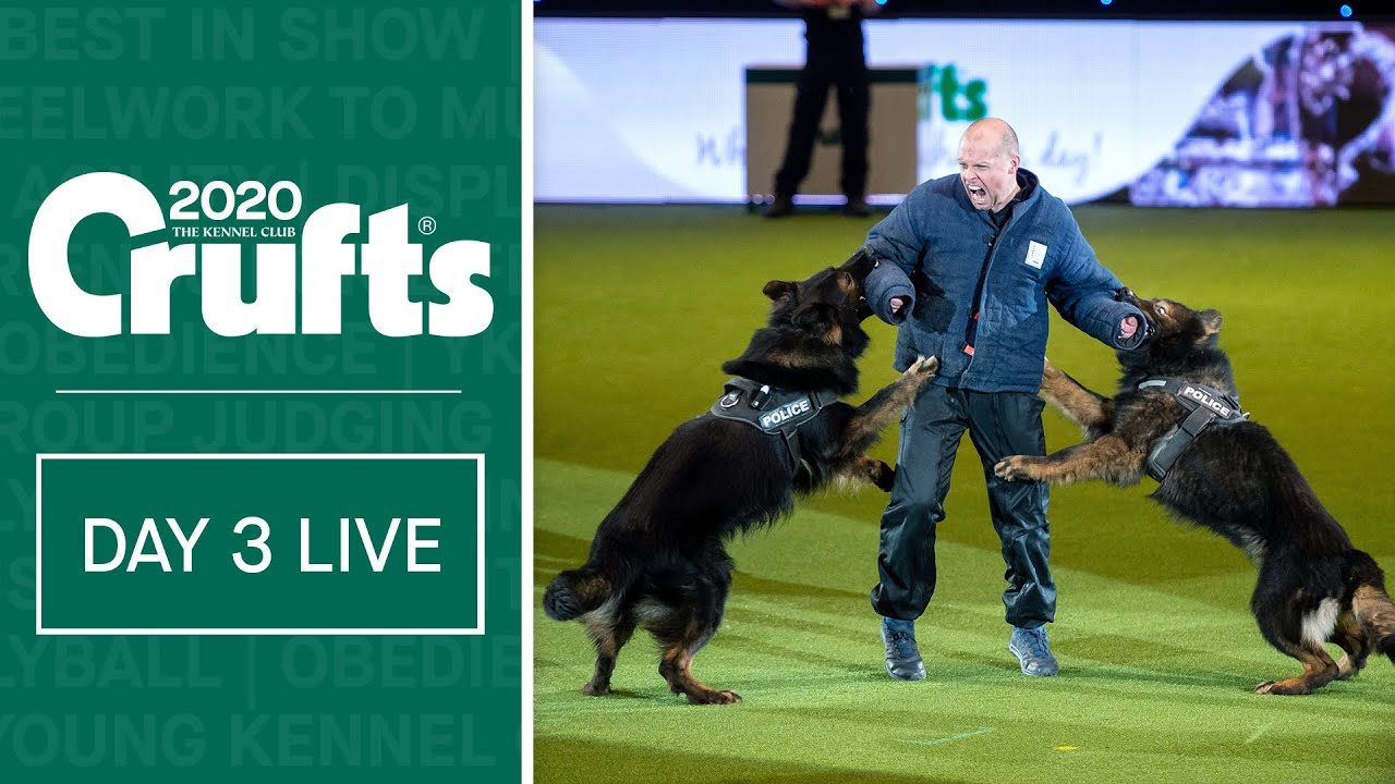 Day 3 Live Crufts 2020 Youtube