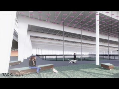 Large Indoor Dog Park Coming To Austin | KVUE