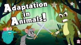 ANIMALS ADAP…