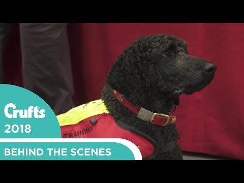 The Power of Dogs - Dog Aid | Crufts 2018
