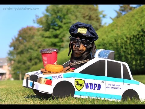Cop dog's high-speed pursuit