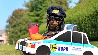 Download Dachshund High-Speed Police Chase! Mp3 and Videos