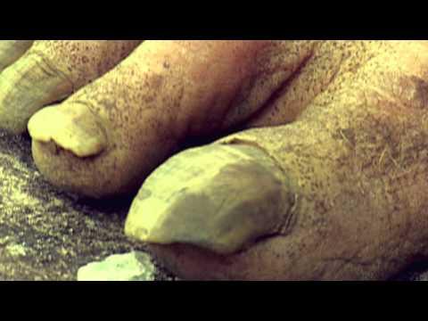 Trailer do filme Túmulos e Ossos
