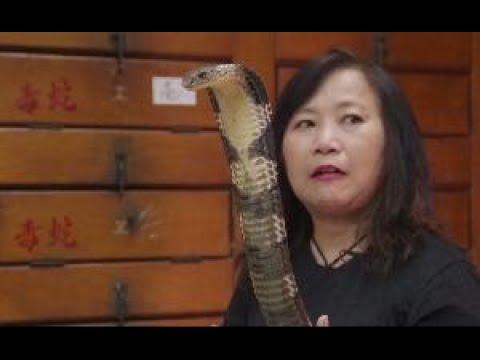 """(香港故事)""""蛇妹""""周嘉玲與蛇共生40年:曾當過小明星 也曾死裏逃生 - YouTube"""