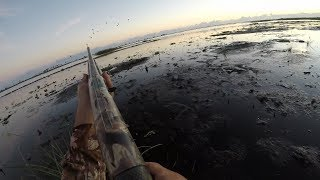 Waterfowling With Mr. Wilson & His Dog 2019