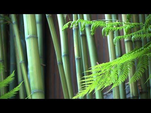 Zen Garden - Bamboo (Nature sounds only...no music)