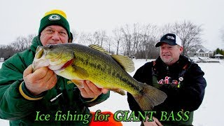 Fishing GIANT BASS on tip-ups!