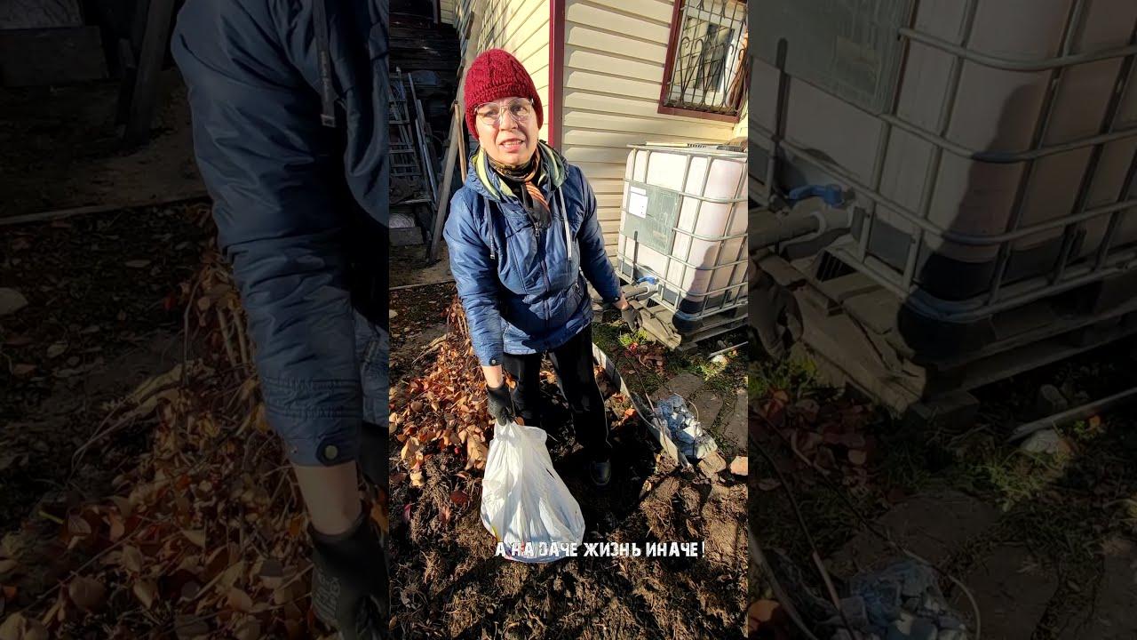 Готовим многолетние флоксы к зиме