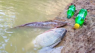 Amazing Boy Catch Fish With Plastic Bottle Fish Trap ! Fish Trap in Cambodia Method (Part-4)