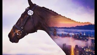 Кони / Лошади. Клип про лошадей