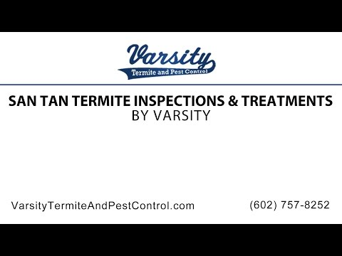 San Tan Termite Inspections & Treatments | Varsity Termite & Pest Control