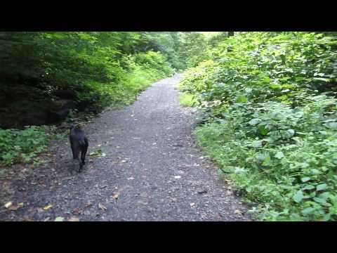 P10 Acess Path in Wissahickon Valley Park