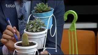 بامداد خوش - باغداری - صحبت با فریدون فروتن در مورد گل های زینتی