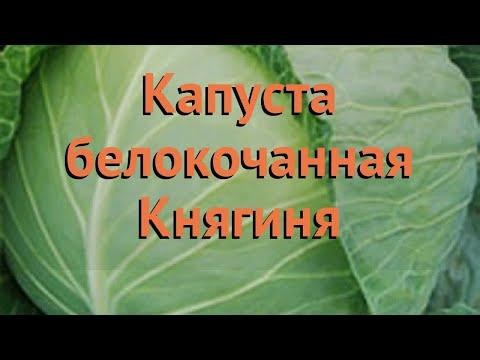 Капуста белокочанная Княгиня (knyaginya) 🌿 капуста Княгиня обзор: как сажать семена капусты Княгиня