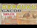 Suara Derkuku Bersih Cocok Untuk Pikat  Mp3 - Mp4 Download
