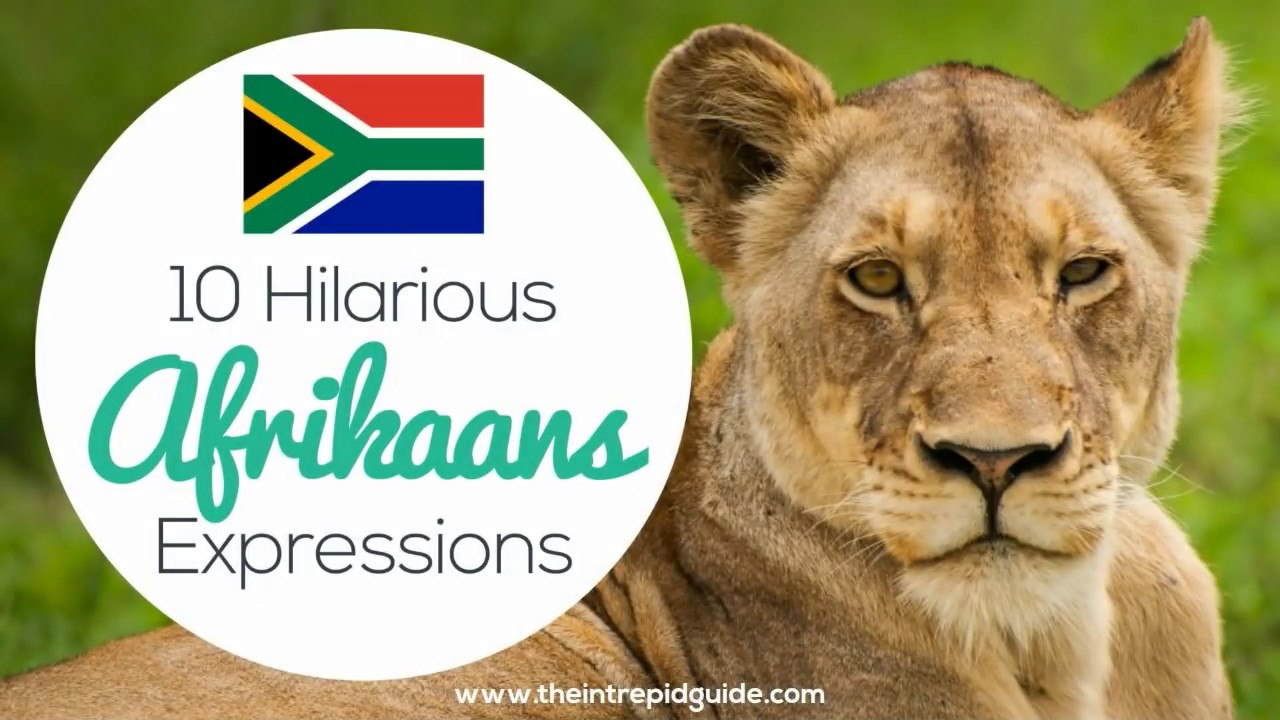 Learn to speak afrikaans free download