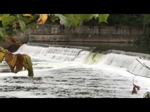 Humber River salmon run 2016