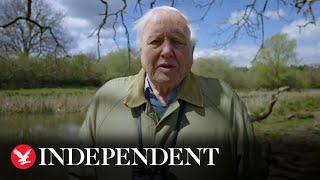 Sir David Attenborough warns of 'crippling' climate crisis