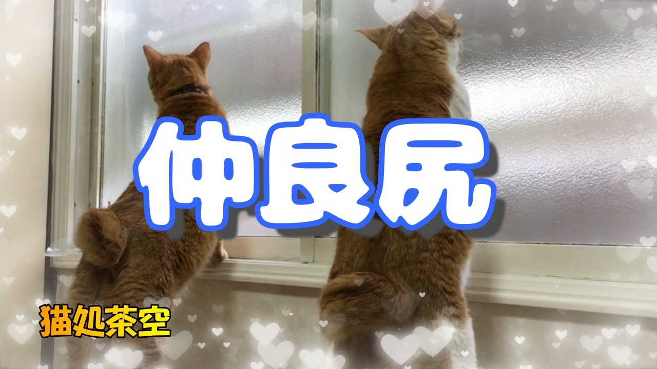 梅雨入りしたかな☔ 第七十八話 みんなで楽しく遊んだよ♪