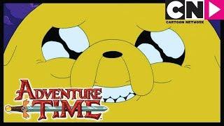 - Время приключений Джейк пёс Cartoon Network