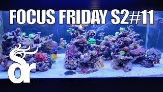 Bakım Balık Alarak FF S2#11 |