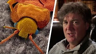 Bed Bugs & Tape Worms | James May's Things You Need To Know | Brit Lab | BBC