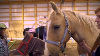 Equine Connection   Youth Development - Skills For LIFE