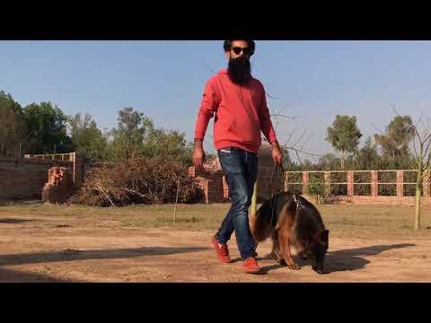 Kennel in Lahore Badiyan | FunnyDog TV
