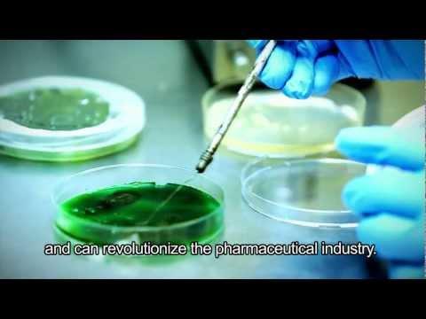 Developing An Algae-based Alternative To Fish Oil