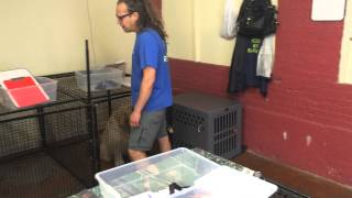 Dog Kennel Life, Dog Training Facility