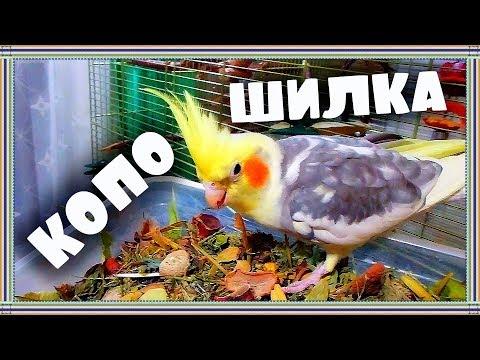«Злые Птички» смотреть видео онлайн