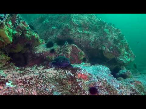 Top 5 Dive Sites Around Campbell River