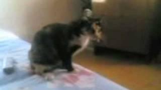 Прикол кот катается на заднице .3gp