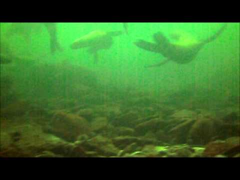 Awesome Activities | NDO sealion dive Jan 2015