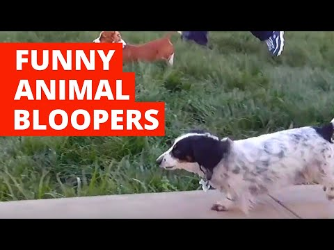 Funny Animal Bloopers (2020) Funny Pet Videos #2