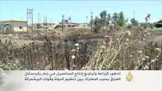"""تدهور الزراعة في زمار بعد معارك """"التنظيم"""" والبشمركة"""