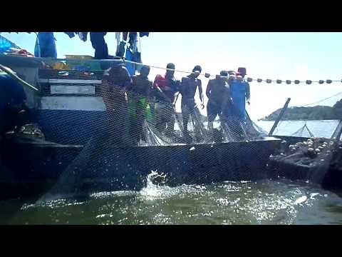 Pesca de Cerco, Lance de Tainha - Traineira Cobra